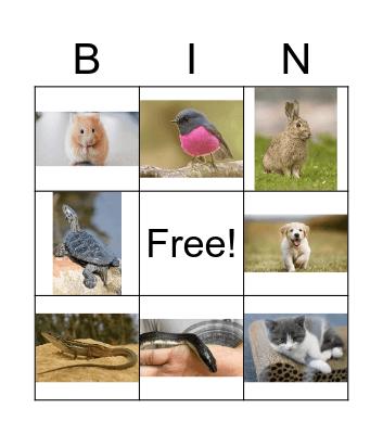 Las mascotas Bingo Card