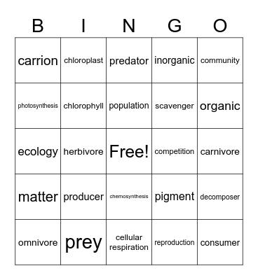 Chapter 3 Lesson 3 Bingo Card