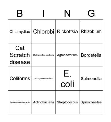Bacterial Taxa Bingo Card