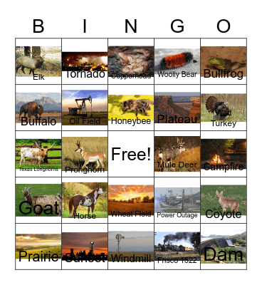 Bugs and other Oklahoma Related Stuff Bingo Card