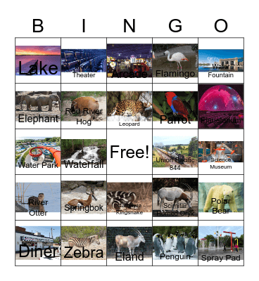 Birds and other Kansas City related stuff Bingo Card