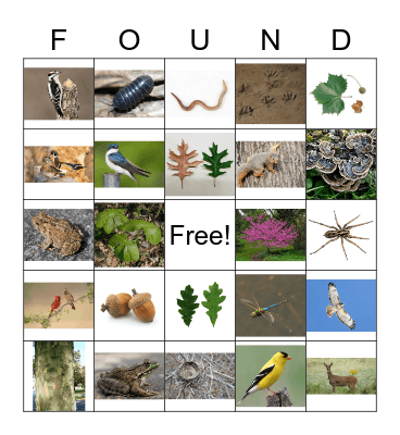 Can We Find It? Bingo Card