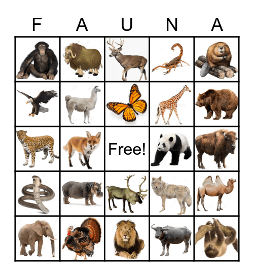 Animals of the Continents Bingo Card