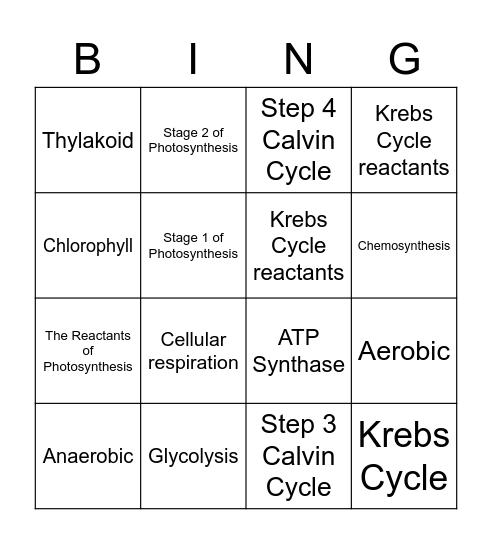 Cell Energetics Bingo Card