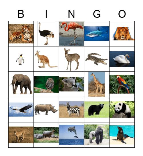 Animals (pictures) Bingo Card