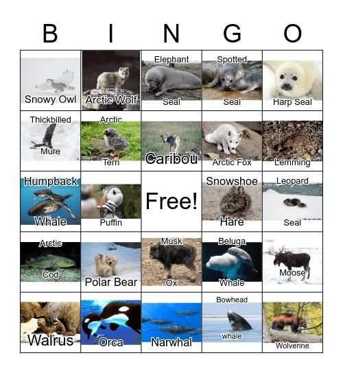 Arctic Animals Bingo Card