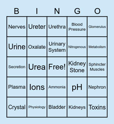 Urinary System Bingo Card