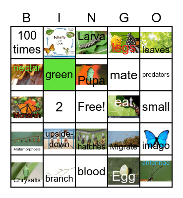 The Butterfly Life Cycle Bingo Card