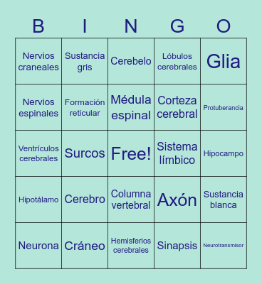 Sistema nervioso Bingo Card