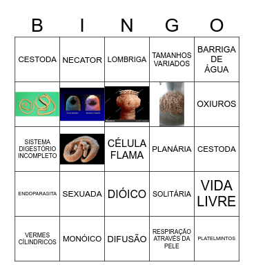 PLATELMINTOS E NEMATODAS Bingo Card