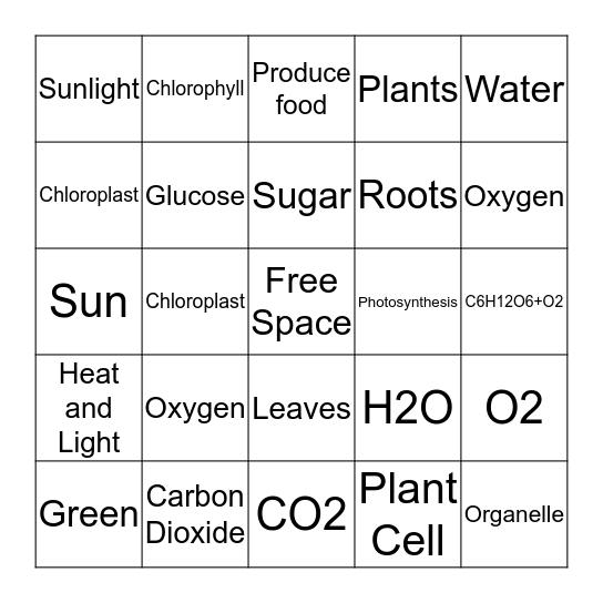 Photosynthesis Bingo Card