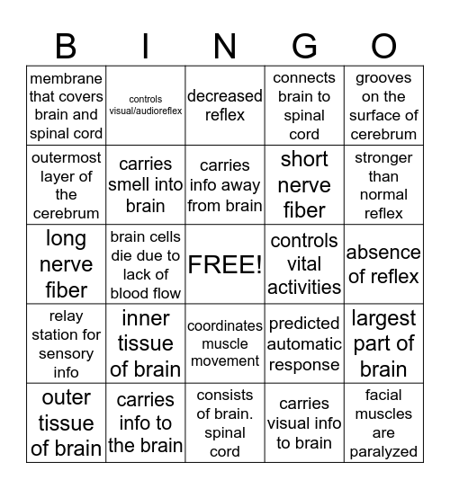 NERVOUS SYSTEM Bingo Card
