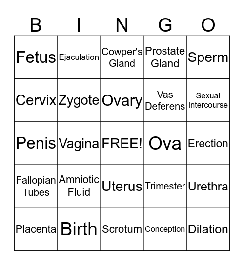 Reproductive System Bingo Card