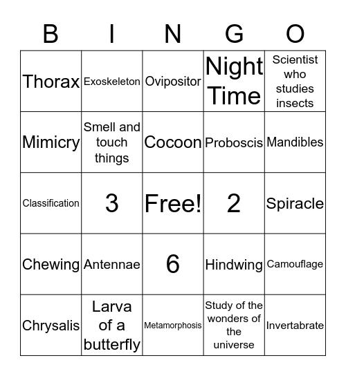 INSECT  Bingo Card