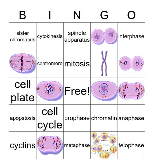 Cell Cycle 2 Bingo Card