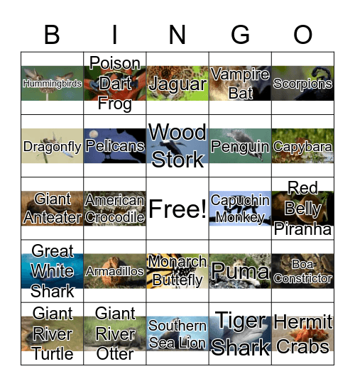 South American Animals Bingo Card