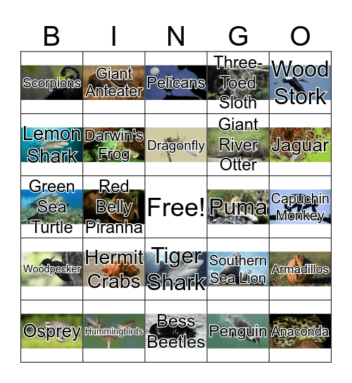 South American Animals Bingo Card