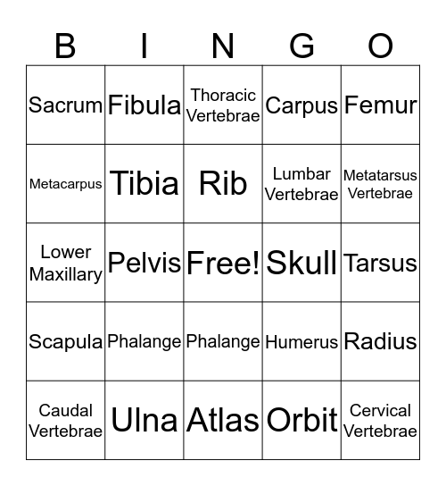 BONE-GO! Bingo Card
