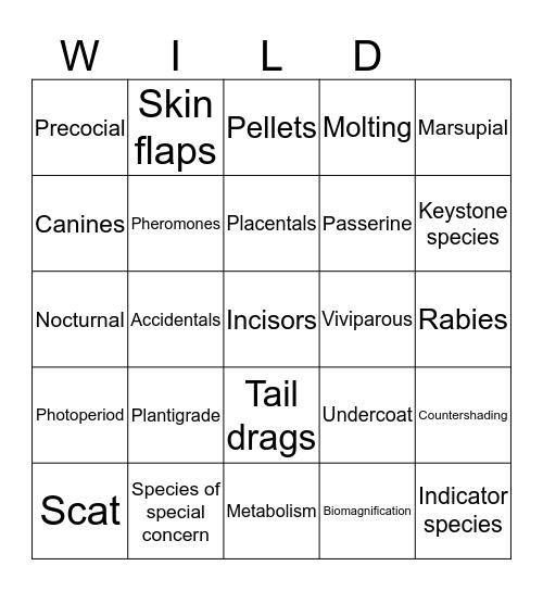 Wildlife set 8 Bingo Card