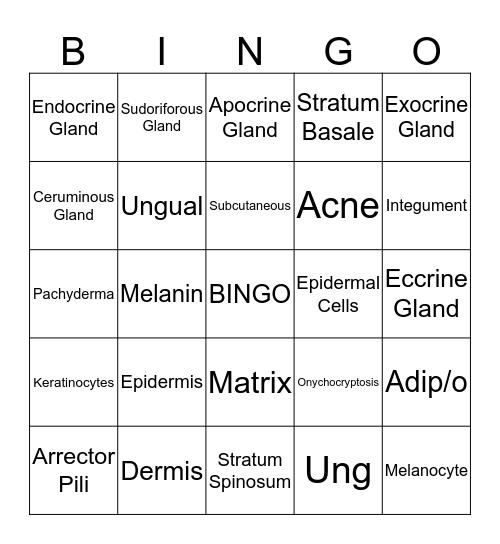 Integumentary System Bingo Card