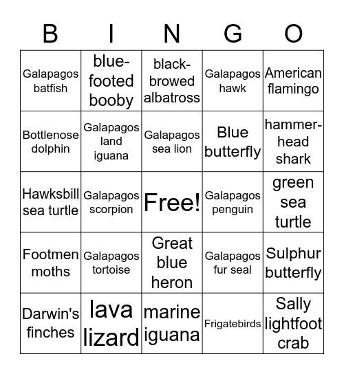 Galapagos Island Animals Bingo! Bingo Card