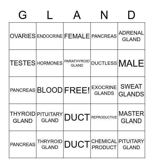 Endocrine System Bingo Card